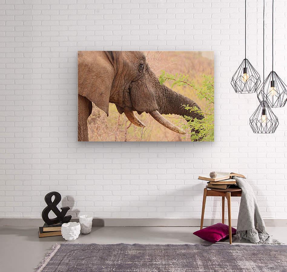 Elefant 6770  Wood print