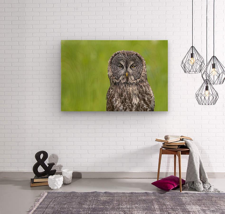 Great Grey Owl - Grey on Green  Wood print