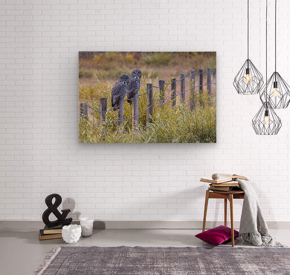 Seeing double - Great Grey Owl  Wood print