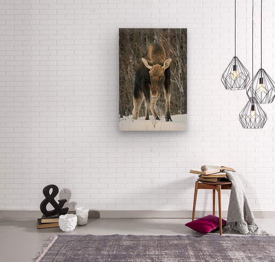 Mr. Moose  Wood print