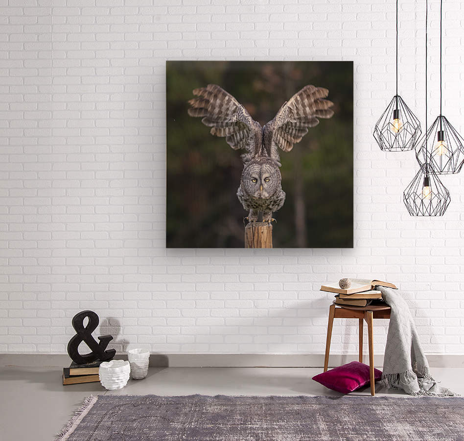Great Grey Owl - Cleared for Take Off  Wood print