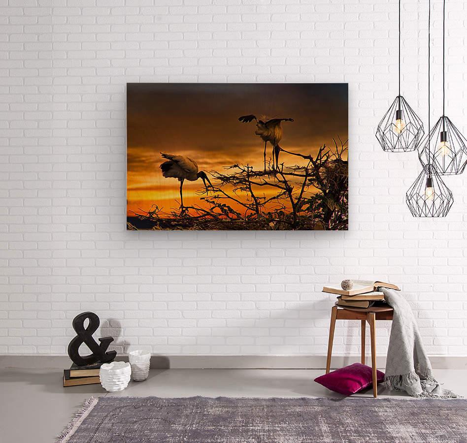 Wood Storks at Sunset  Wood print