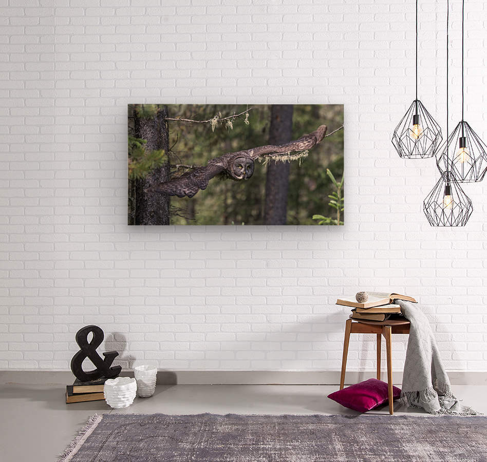 Great Grey Owl - Wing Span  Wood print