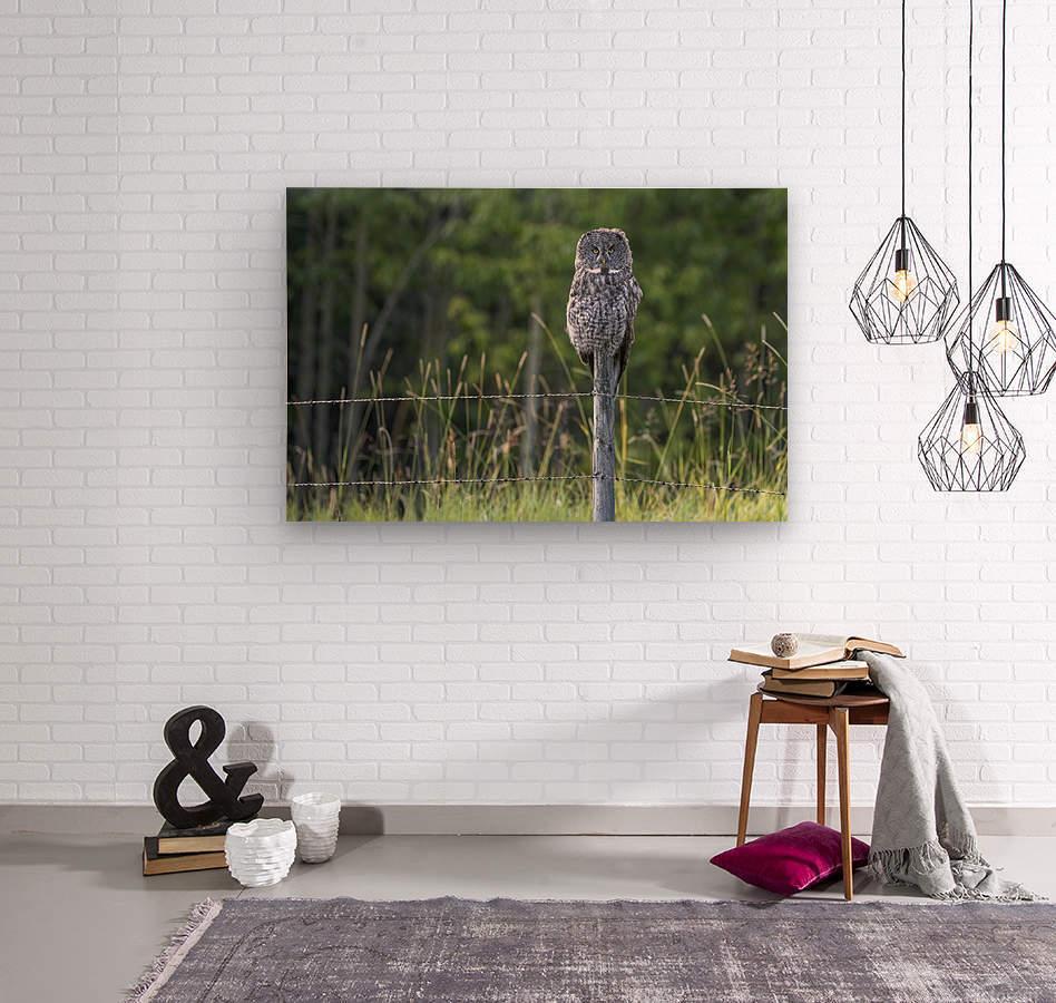 Great Grey Owl - Henry  Wood print