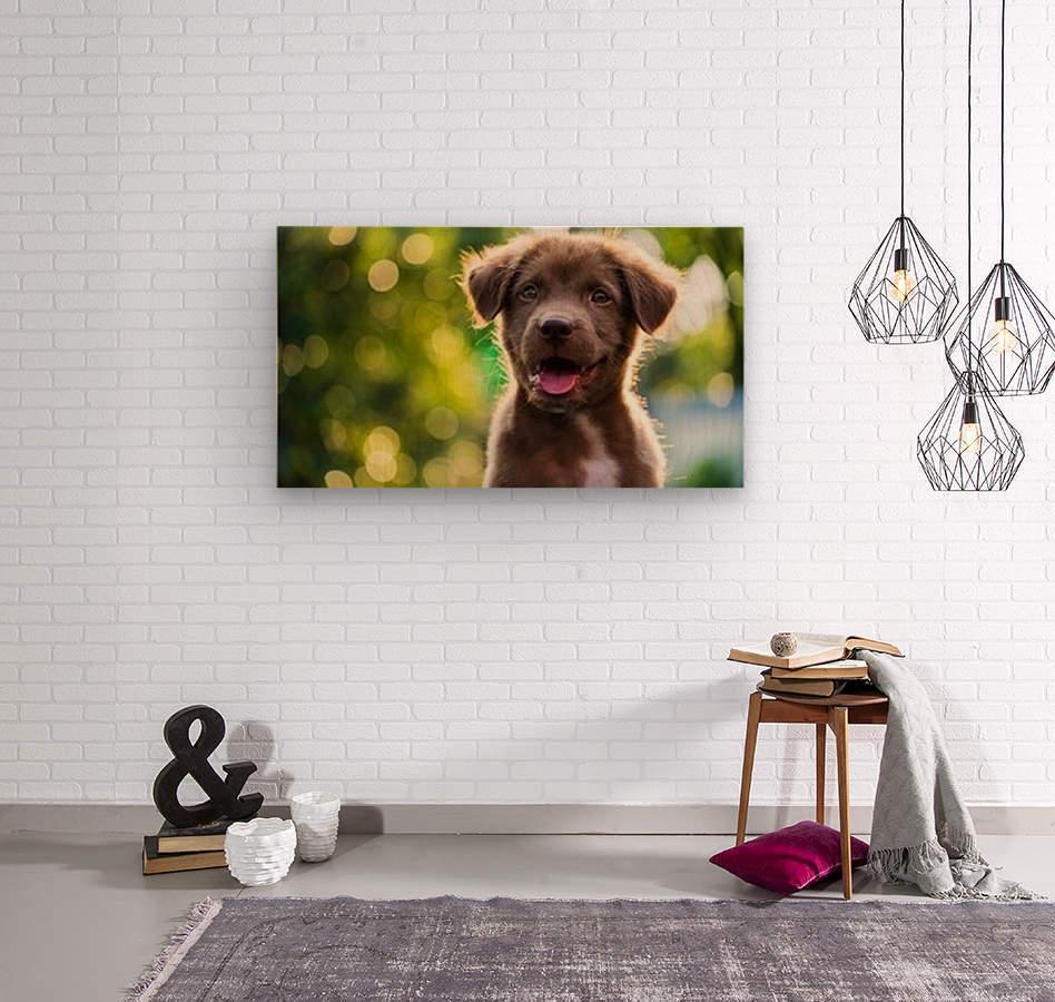 esa dog  Wood print