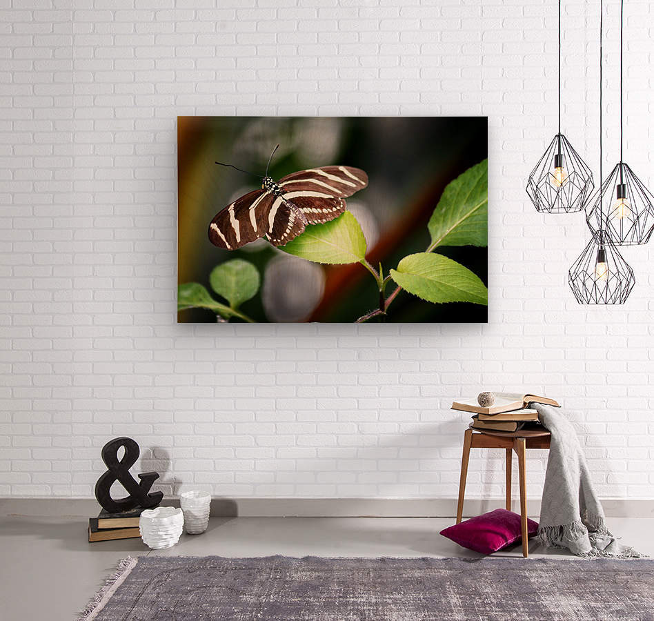 Stripped Butterfly  Wood print