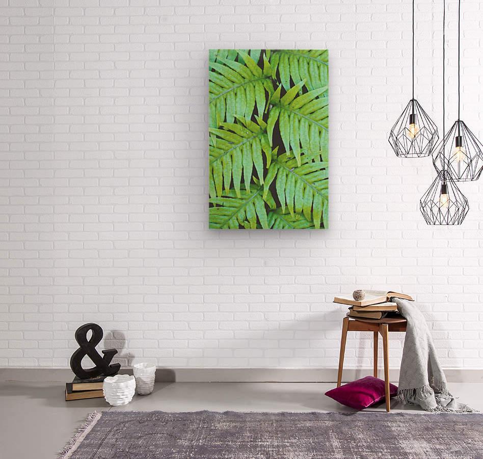 Fern Leaves  Wood print