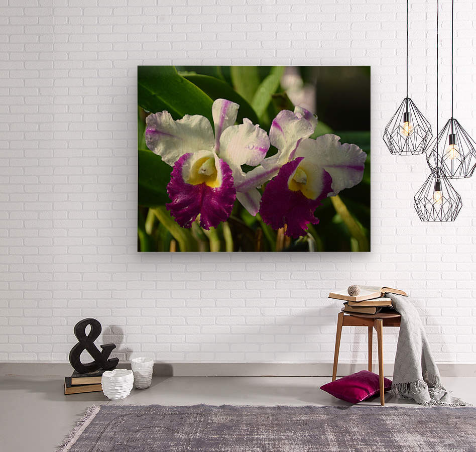 Purple And White Orchids  Wood print
