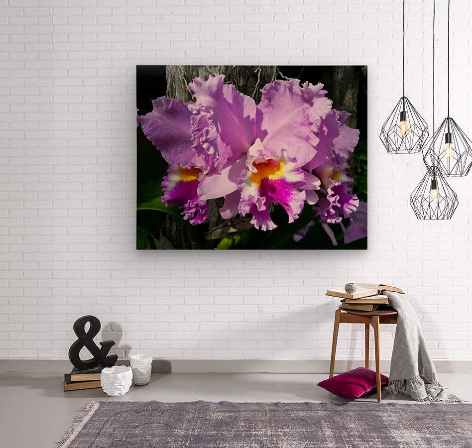 Frilly Orchid  Wood print