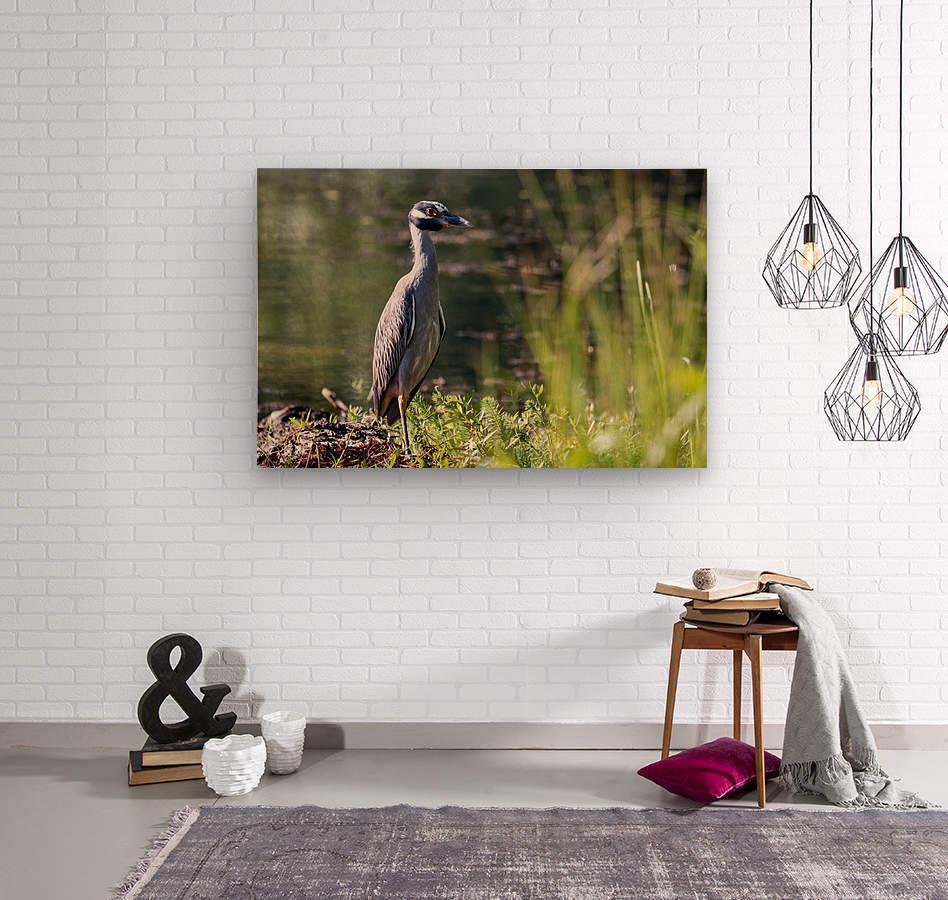 Yellow crowned Night Heron at Brick Pond Park 4690  Wood print