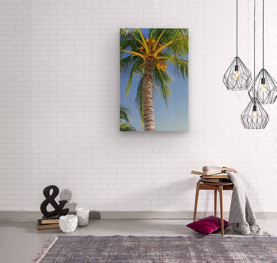 Palm Tree and Coconuts  Wood print