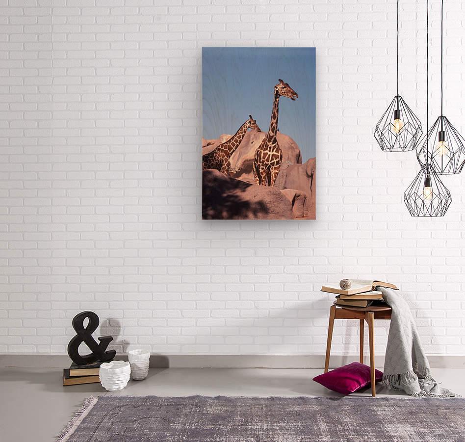 Giraffe Photograph  Wood print