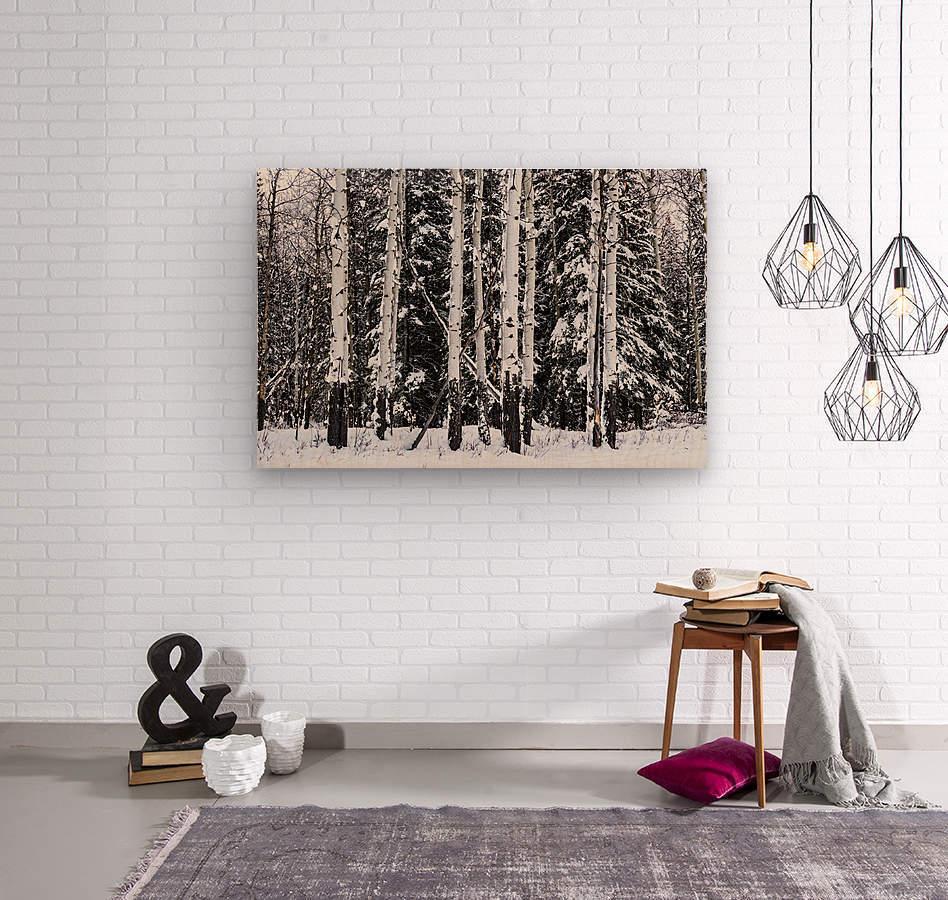Aspens Snow Blanket Banff National Park  Wood print
