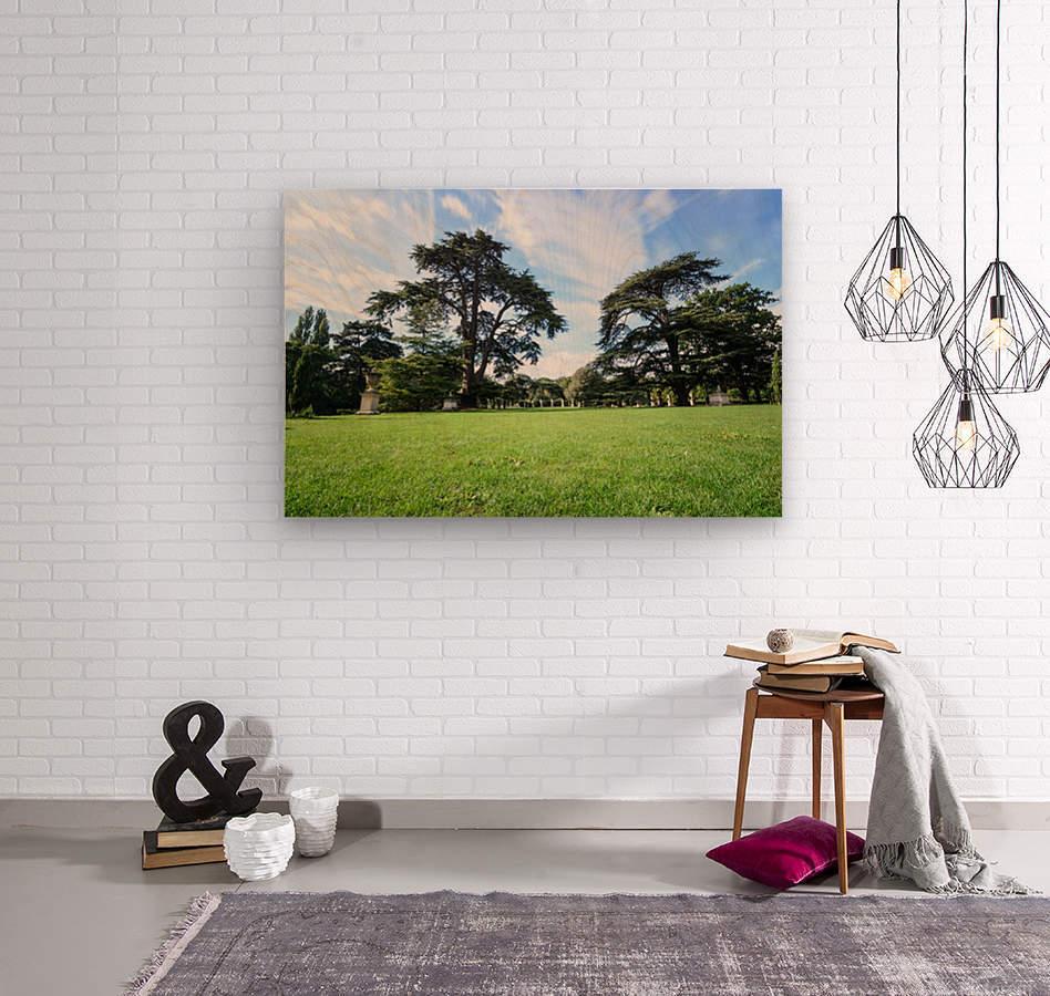 Summer London park  Wood print