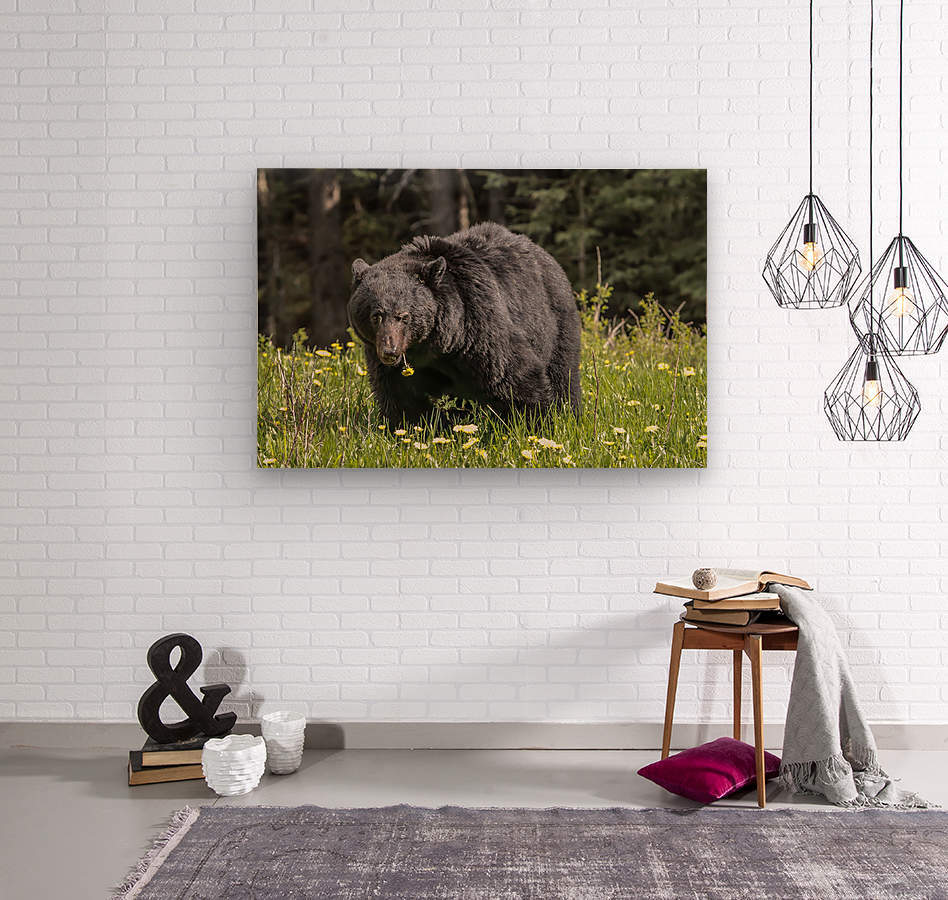 Black Bear With Dandelion  Wood print