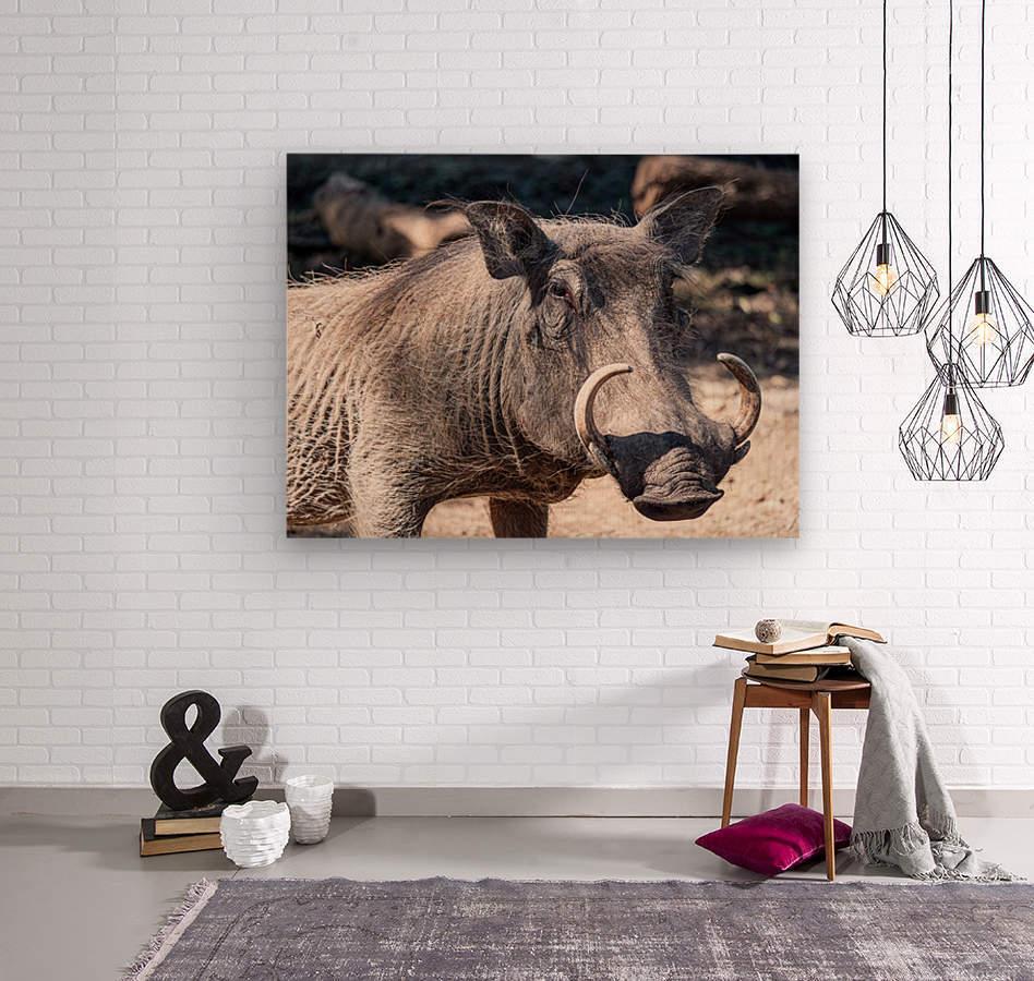 Warthog Close Up  Wood print