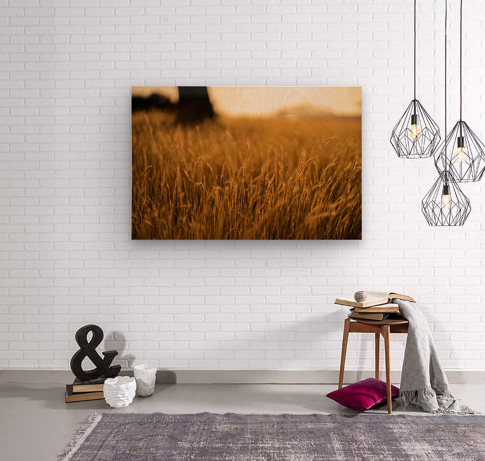 Golden Hour Field  Wood print