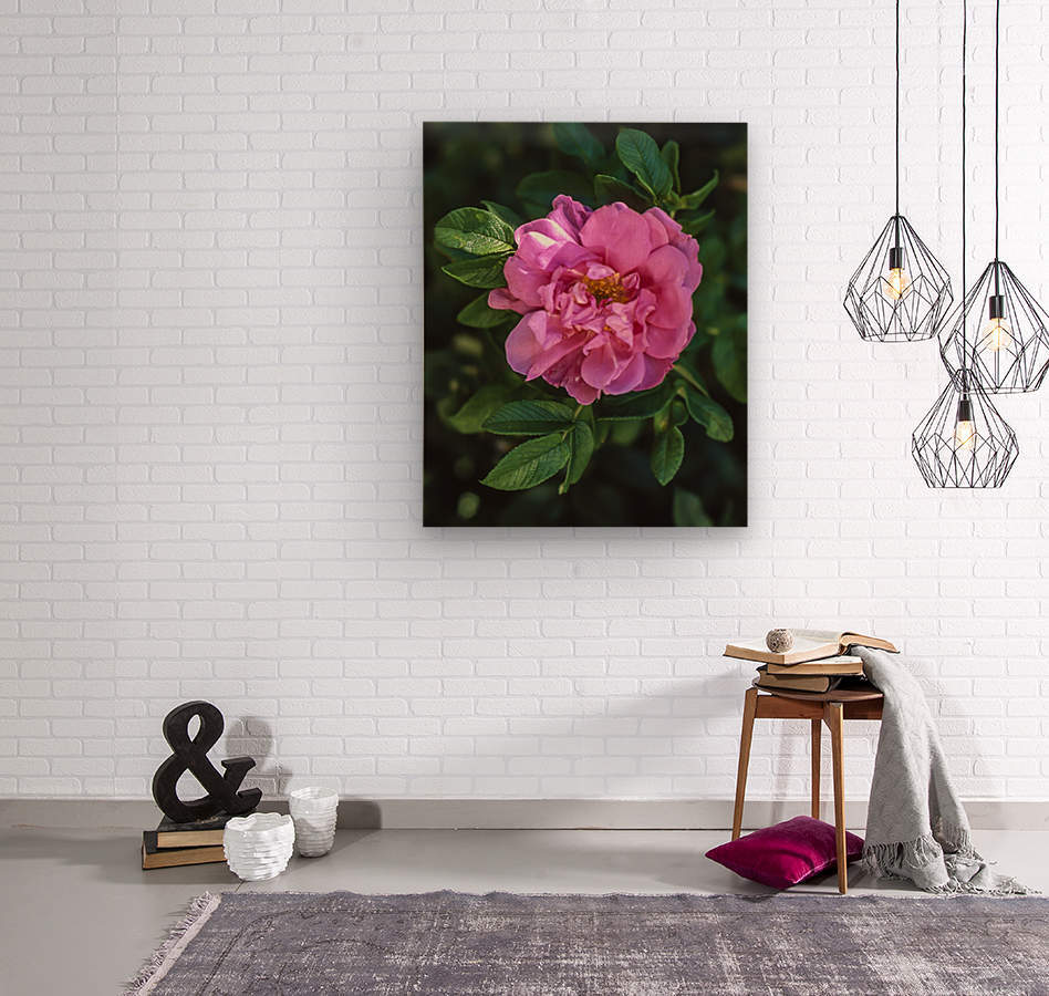 Last Rose of Fall  Wood print