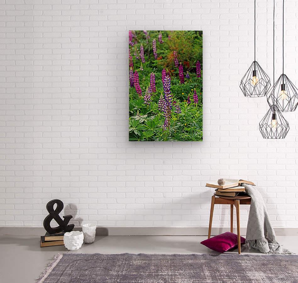 Shades Of Purple Lupine  Wood print