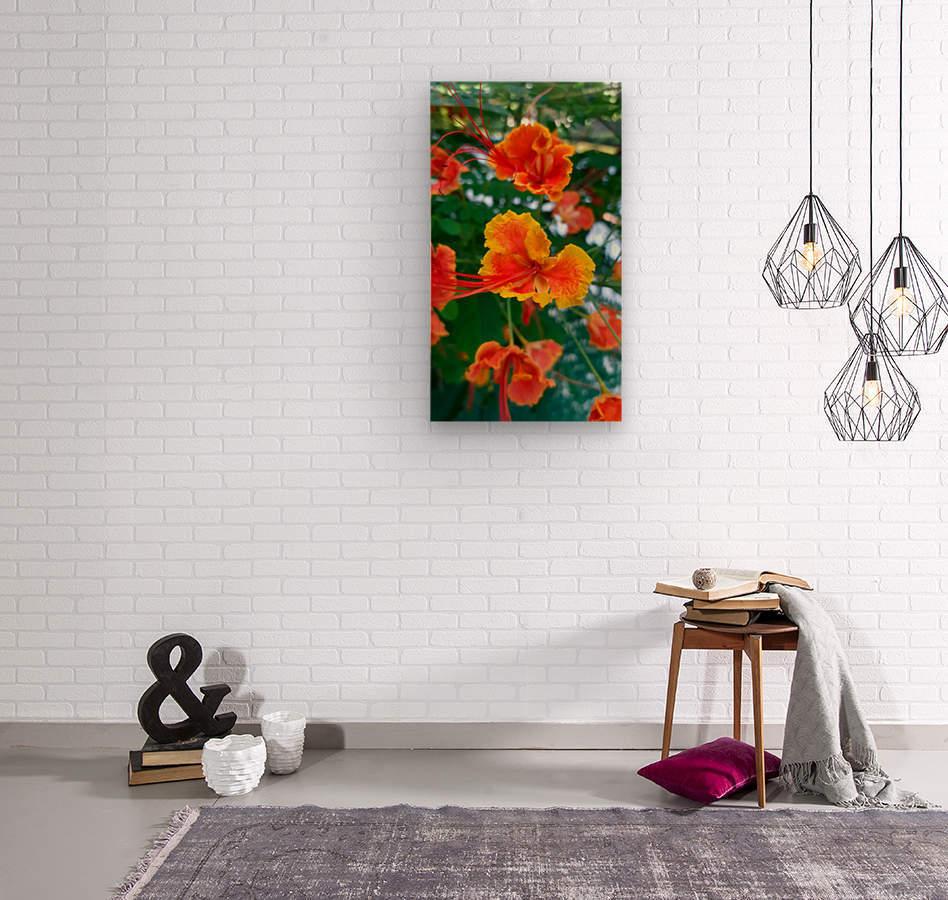 Orange gumamela  Wood print