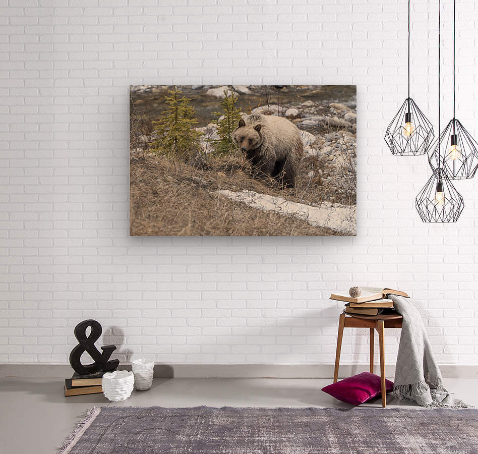 6944 - Grizzly Bear  Wood print