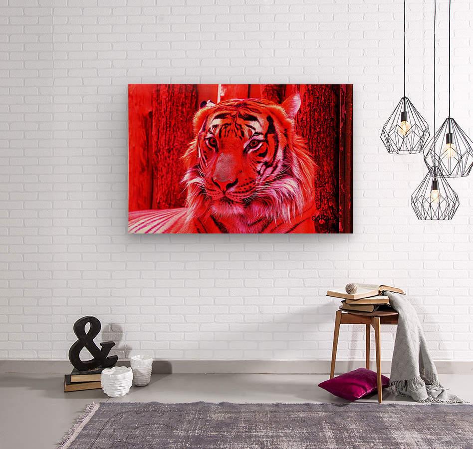 Rare Red Tiger  Wood print
