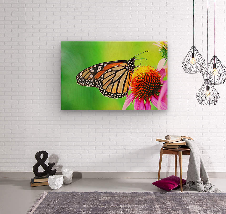 The Beauty Of The Monarch Butterfly  Wood print