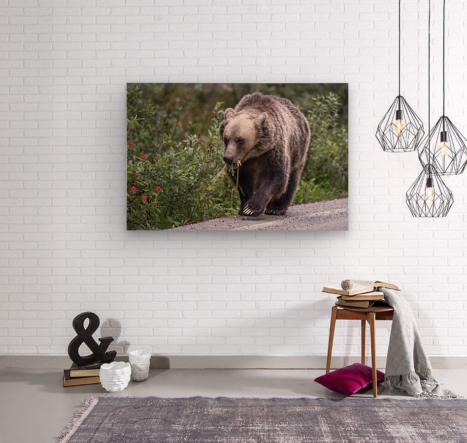 0037 - Grizzly Bear with Dandelions in Banff National Park Canada.  Wood print