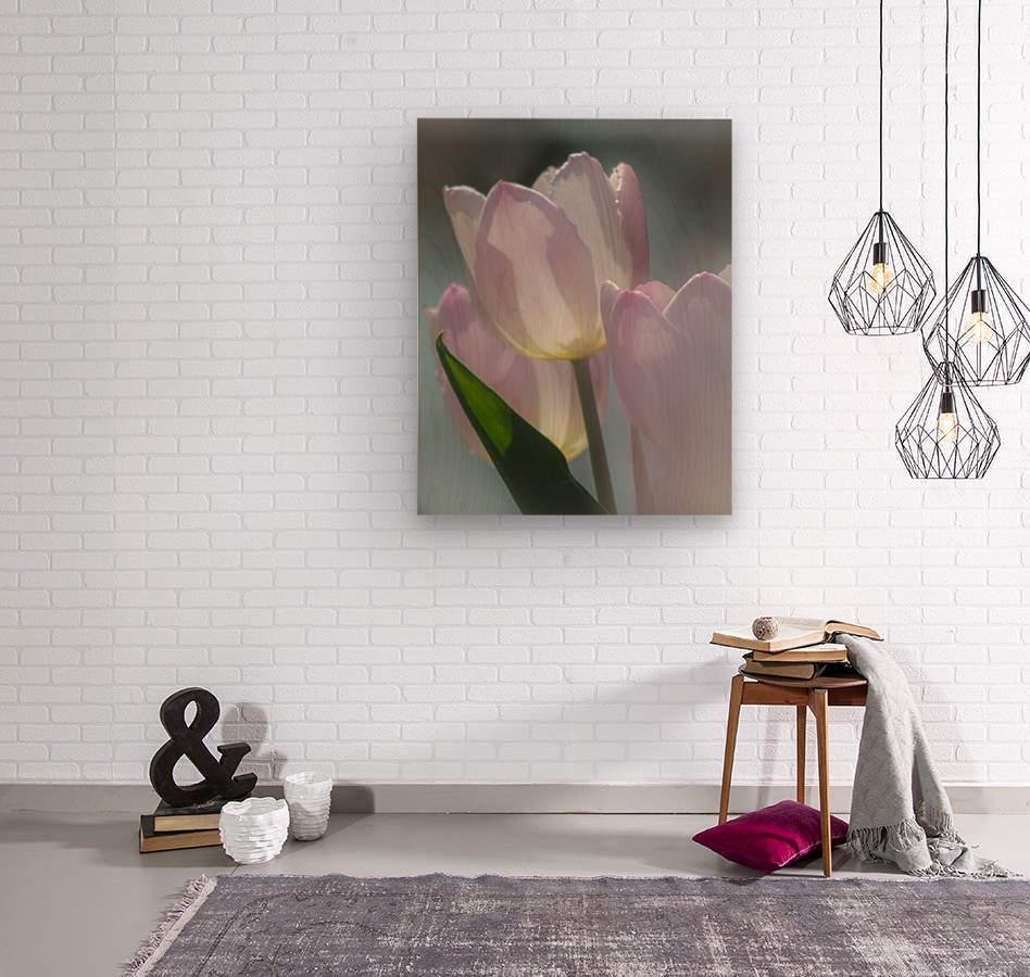 Pale Pink Tulips  Wood print
