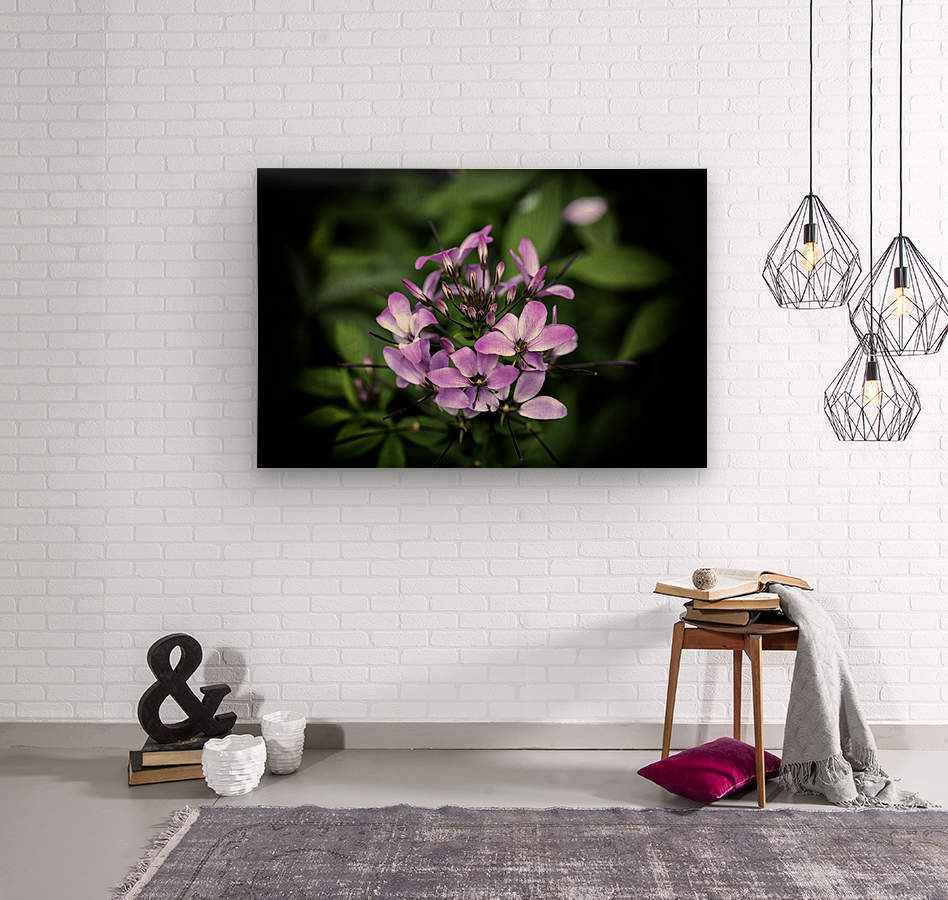 Beeplant  Wood print
