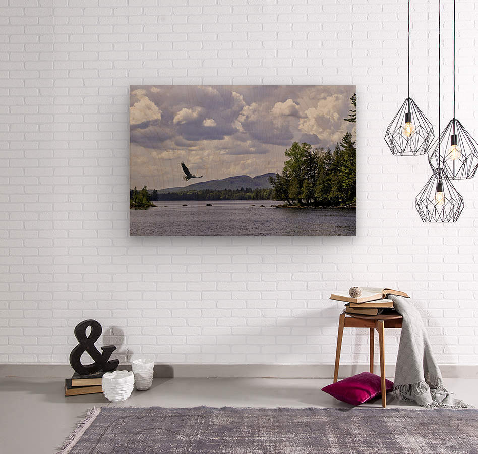 Eagle on Lake  Wood print
