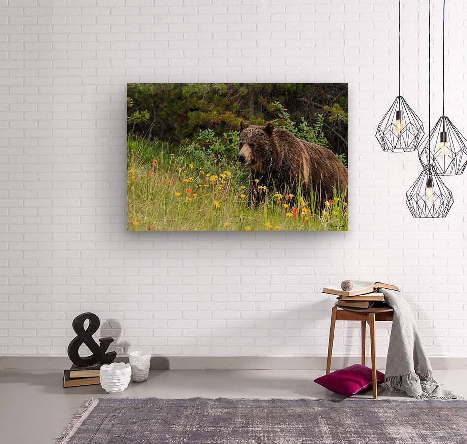 Grizzly Bear Sow 142  IMG_5130  Wood print