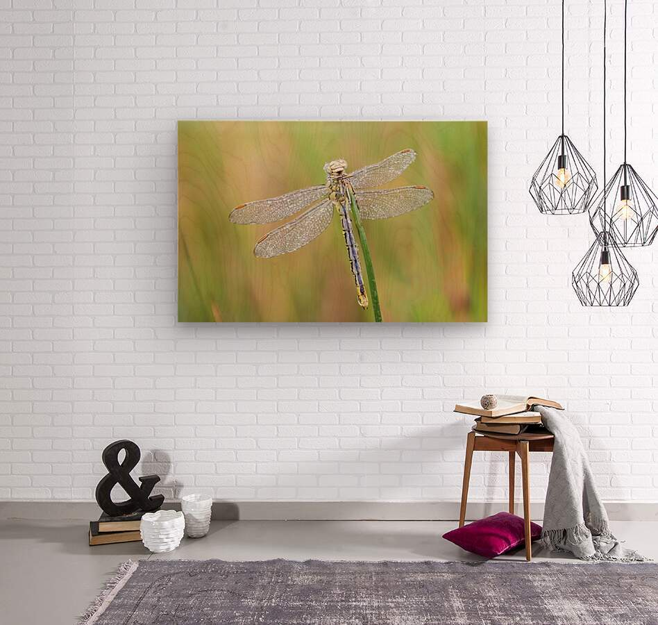 An Fire dragonfly  Wood print