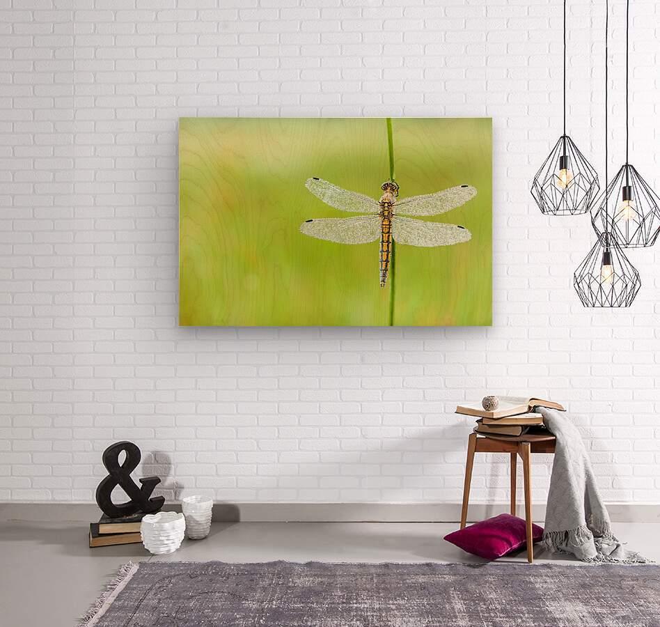An Fire dragonfly  Wood print