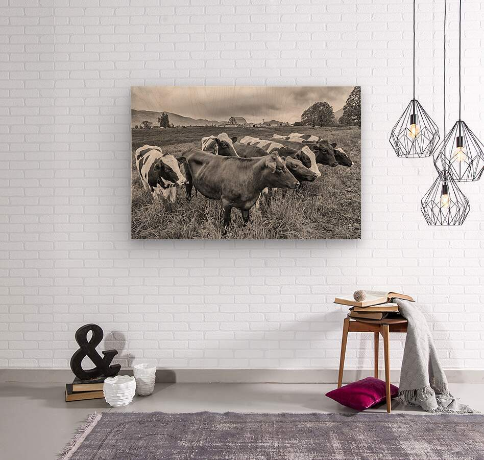 Cow Herd up Close  Wood print