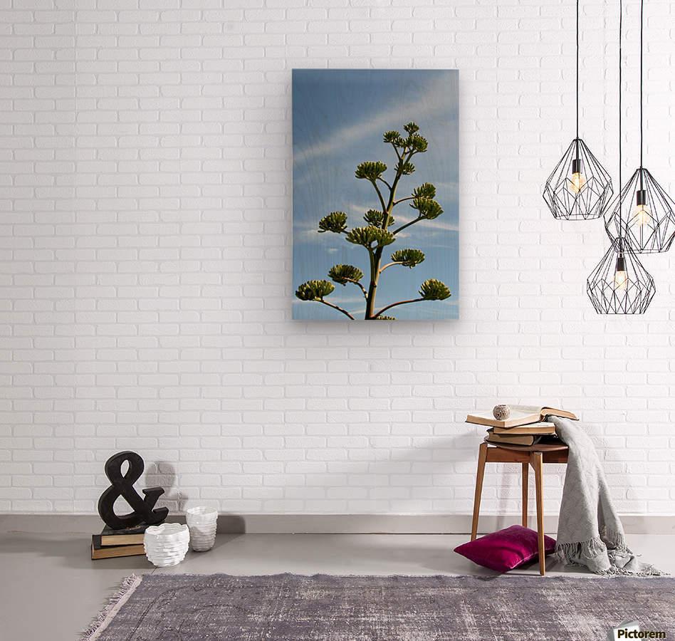Cacti Mundo 01  Wood print