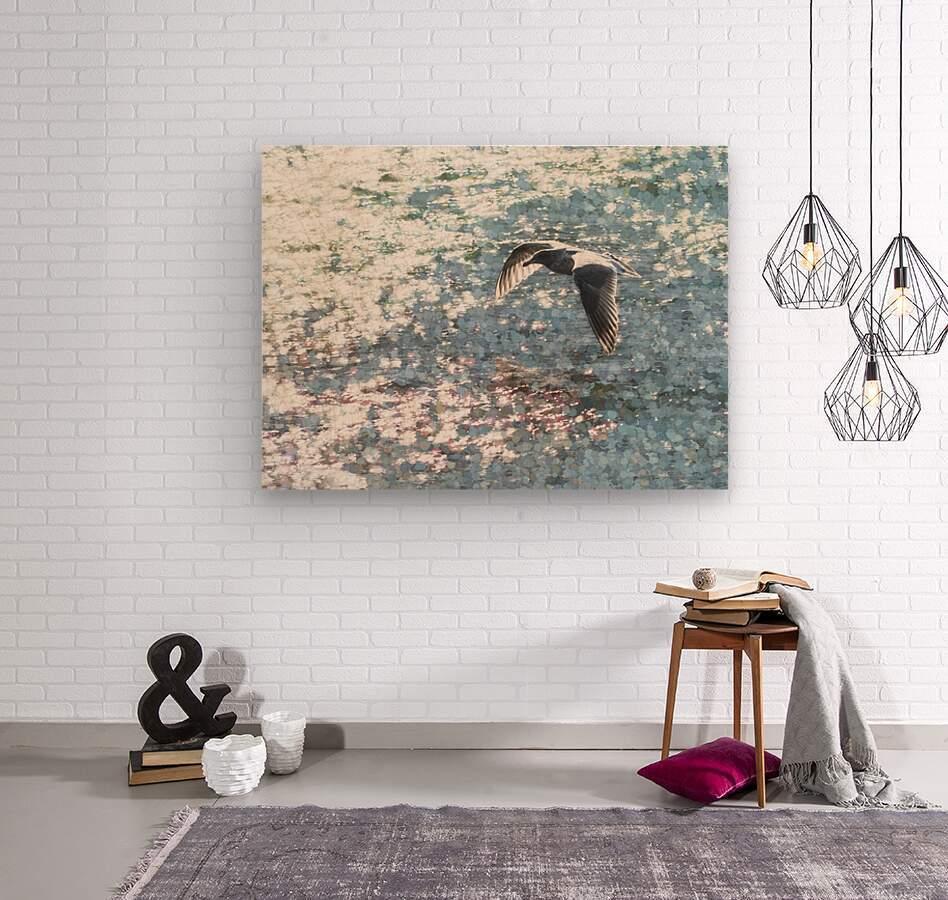Sparkling Gull   Wood print