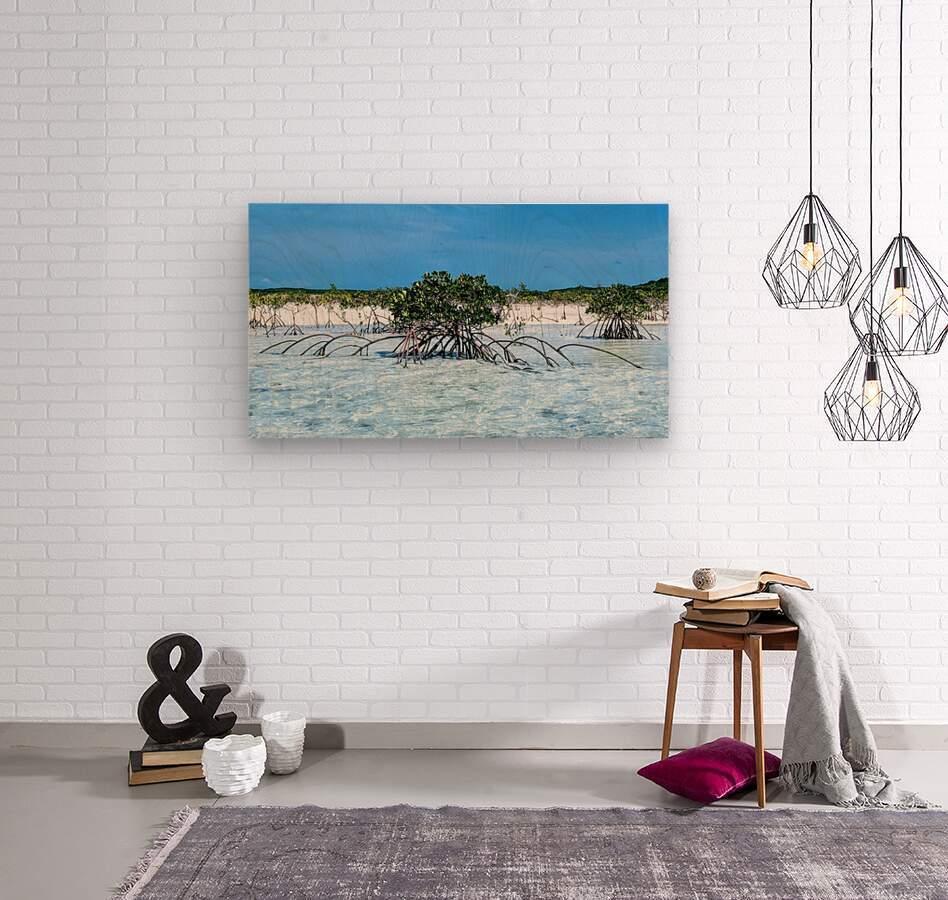 Mangroves in Estuary  Wood print
