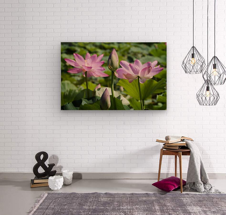 Lots bud with blooming lotus flowers behind  Wood print