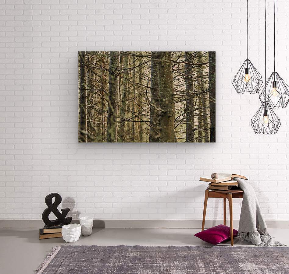 Trees in forest Mauricie National Park Quebec Canada  Wood print
