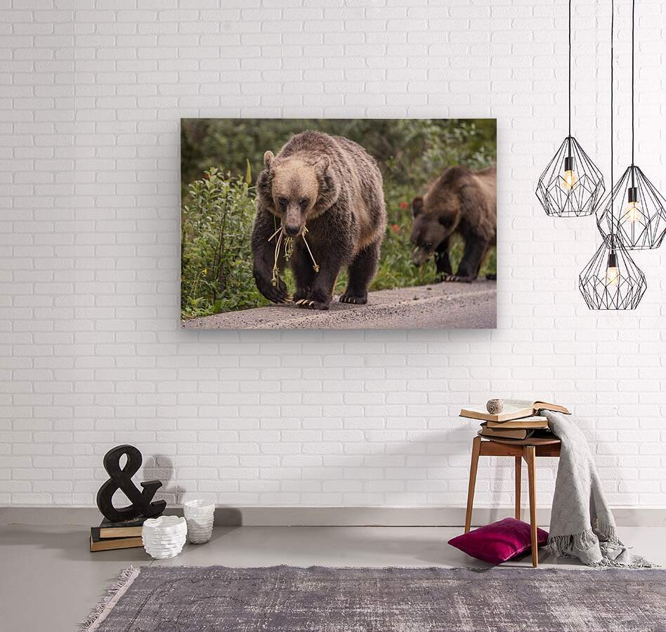 Grizzly Bear - Mouth Full  Wood print