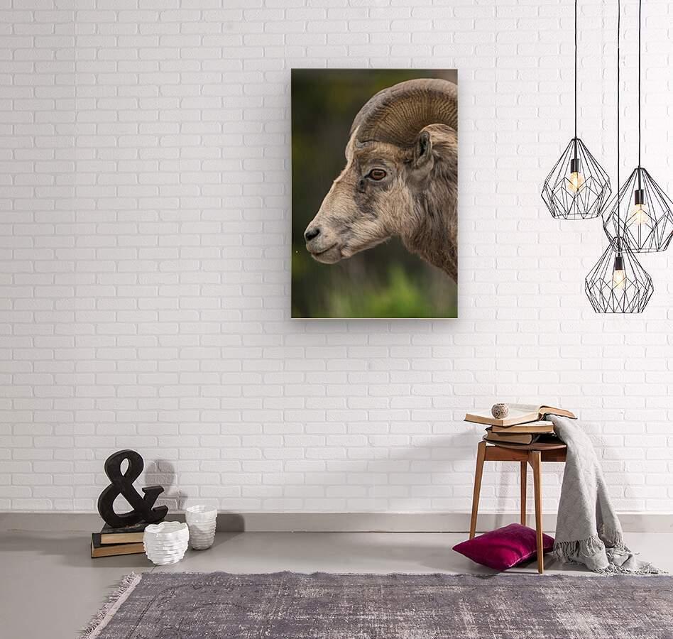 5512 - Big Horn Sheep  Wood print