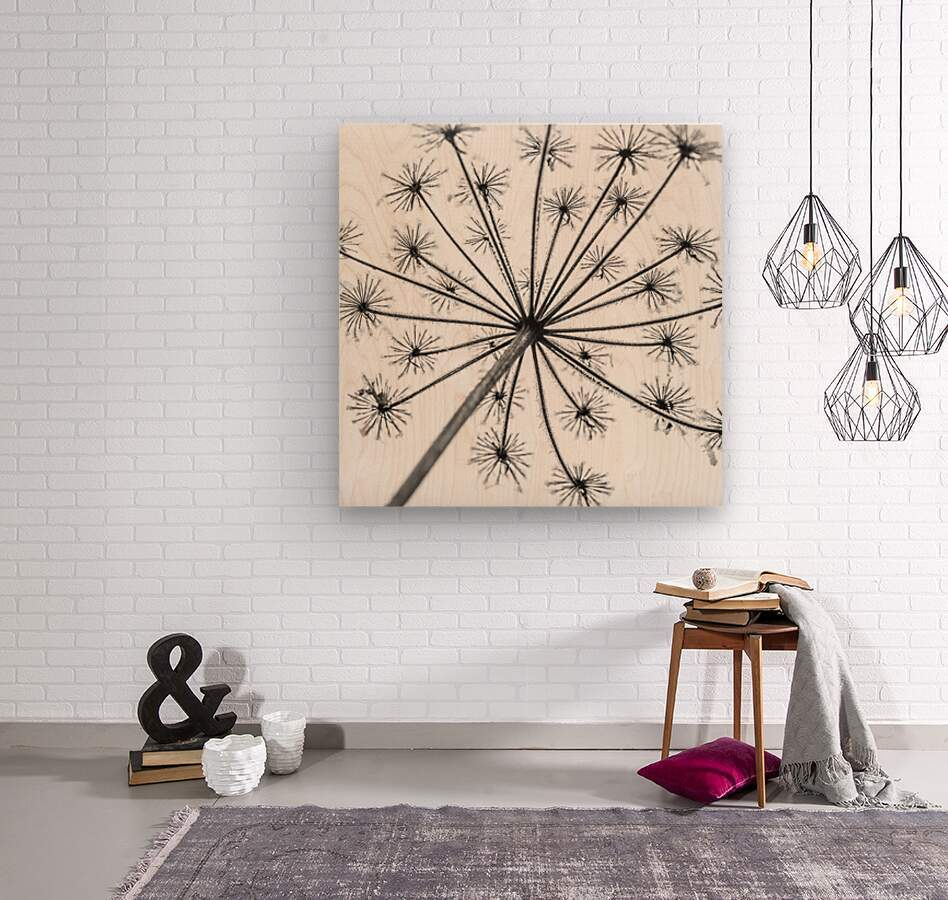 Frosty cow parsley  Wood print