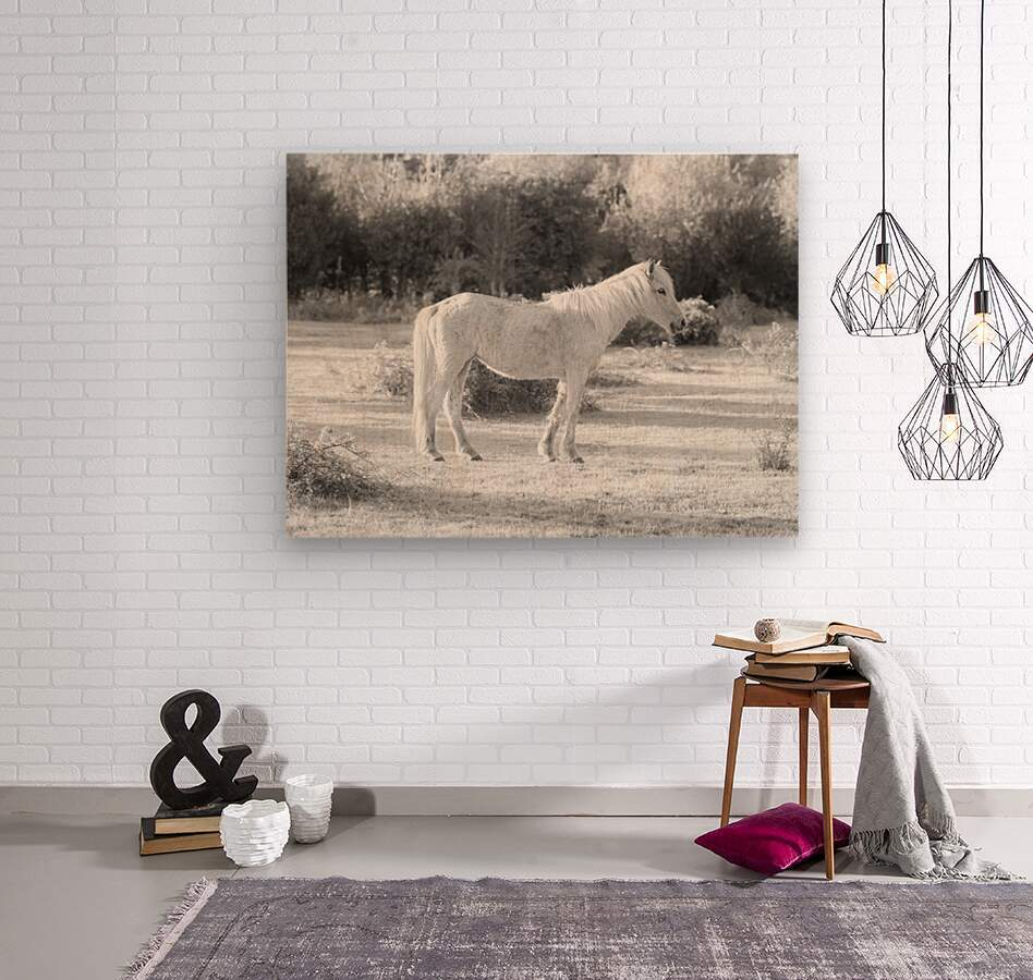 Horses at the New Forest, UK  Wood print