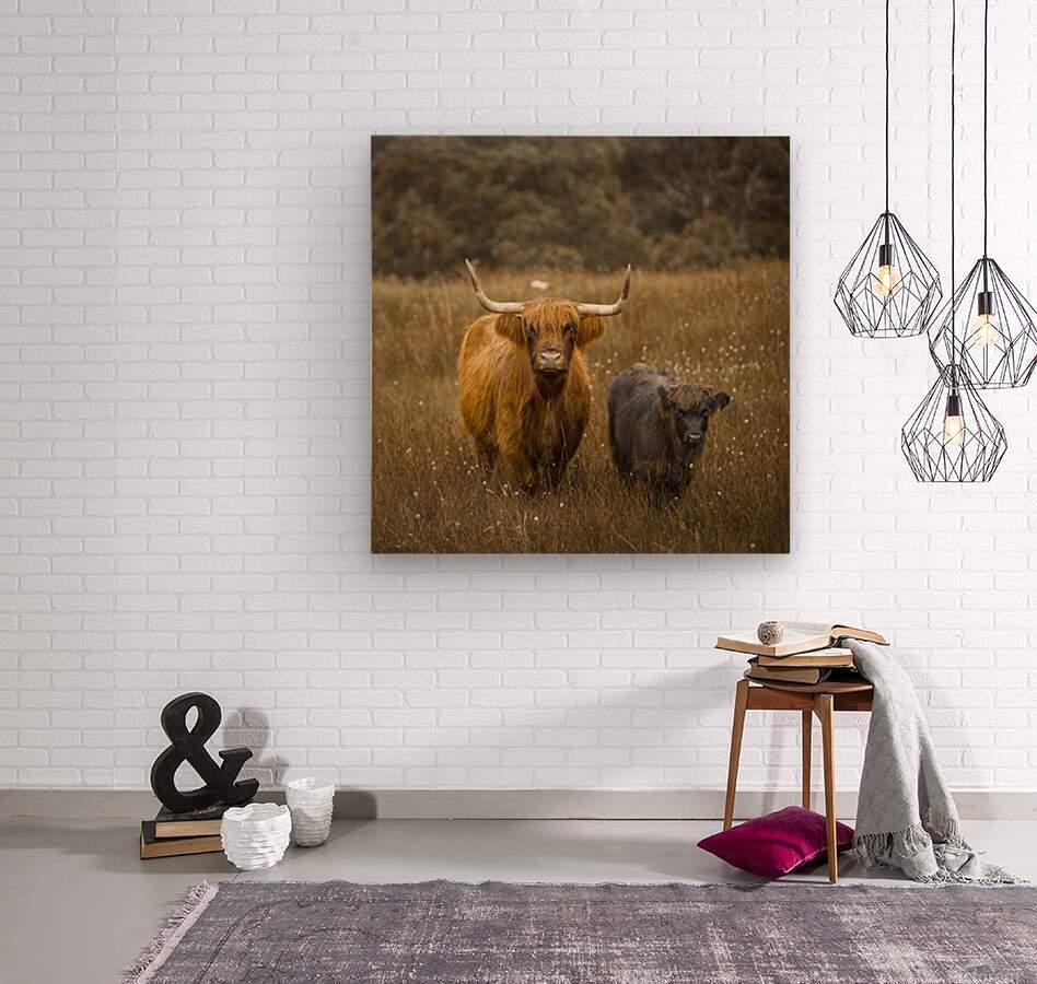 Highland Cows  Wood print