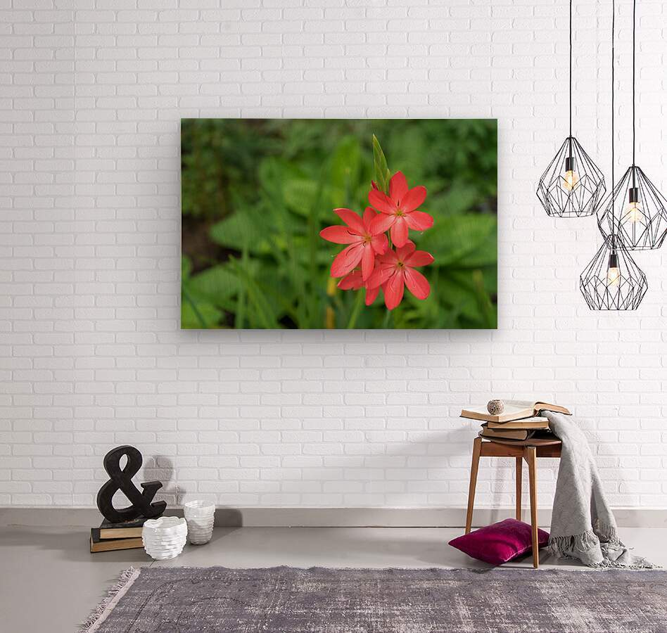 Three Bold Pink River Lily Blooms - Exotic South African Beauties in a Garden  Wood print