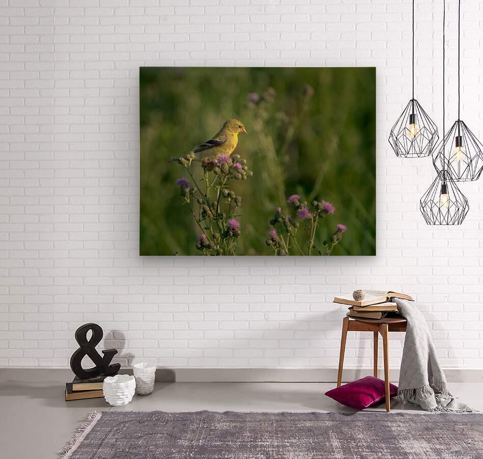 Goldfinch Female  Wood print