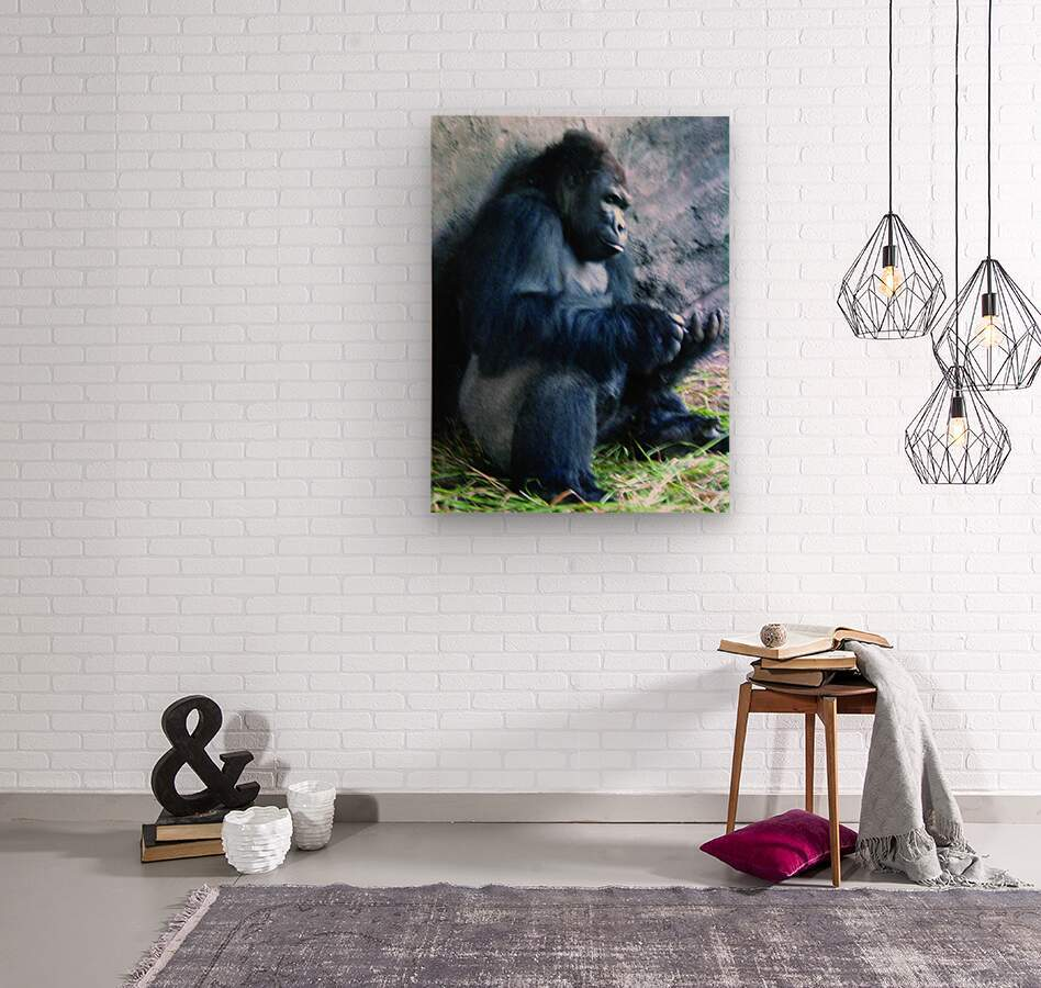Alone Mountain Gorilla Africa  Wood print