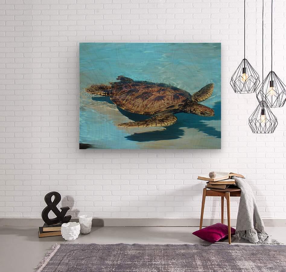Sea Turtle - Natural World Kids Gallery  Wood print