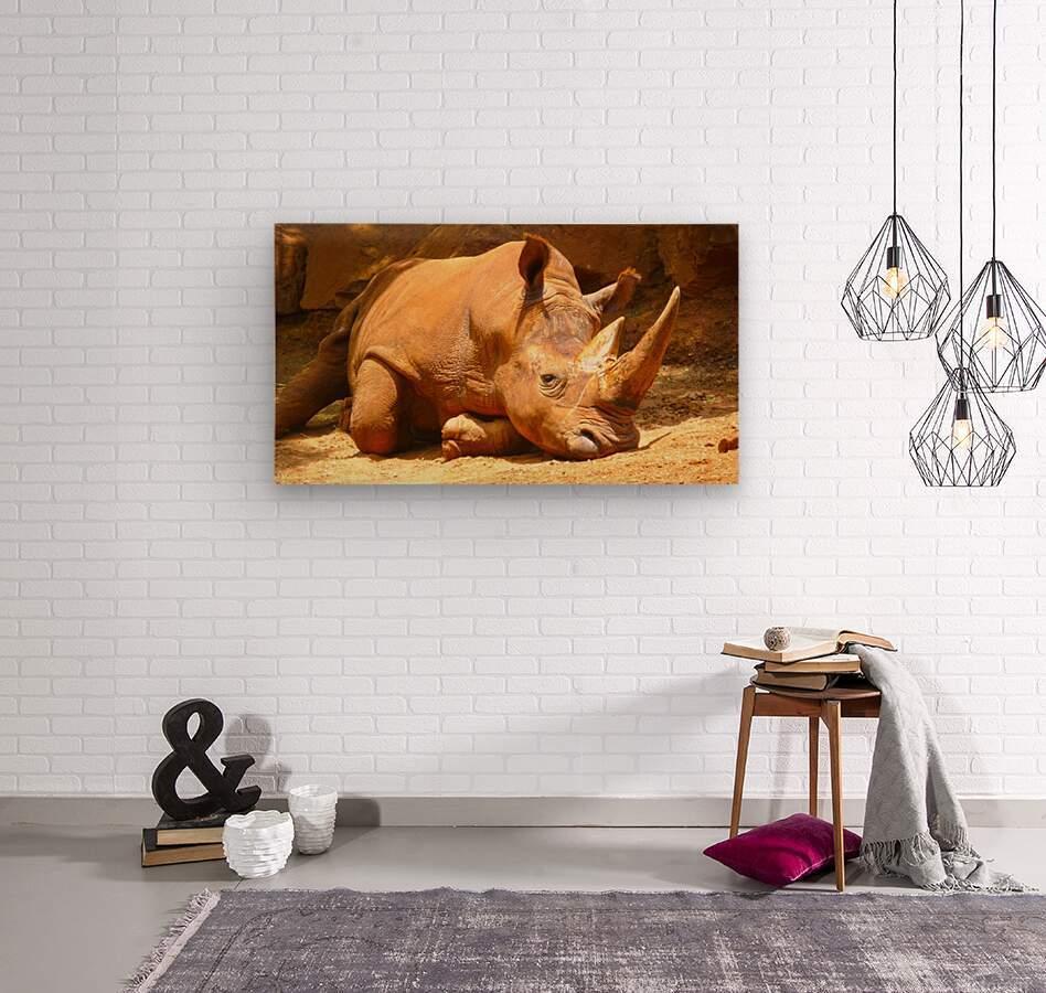 Rhino - Natural World Kids Gallery  Wood print